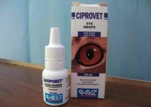 Воспаление глаз у котов: возможные причины и способы лечения