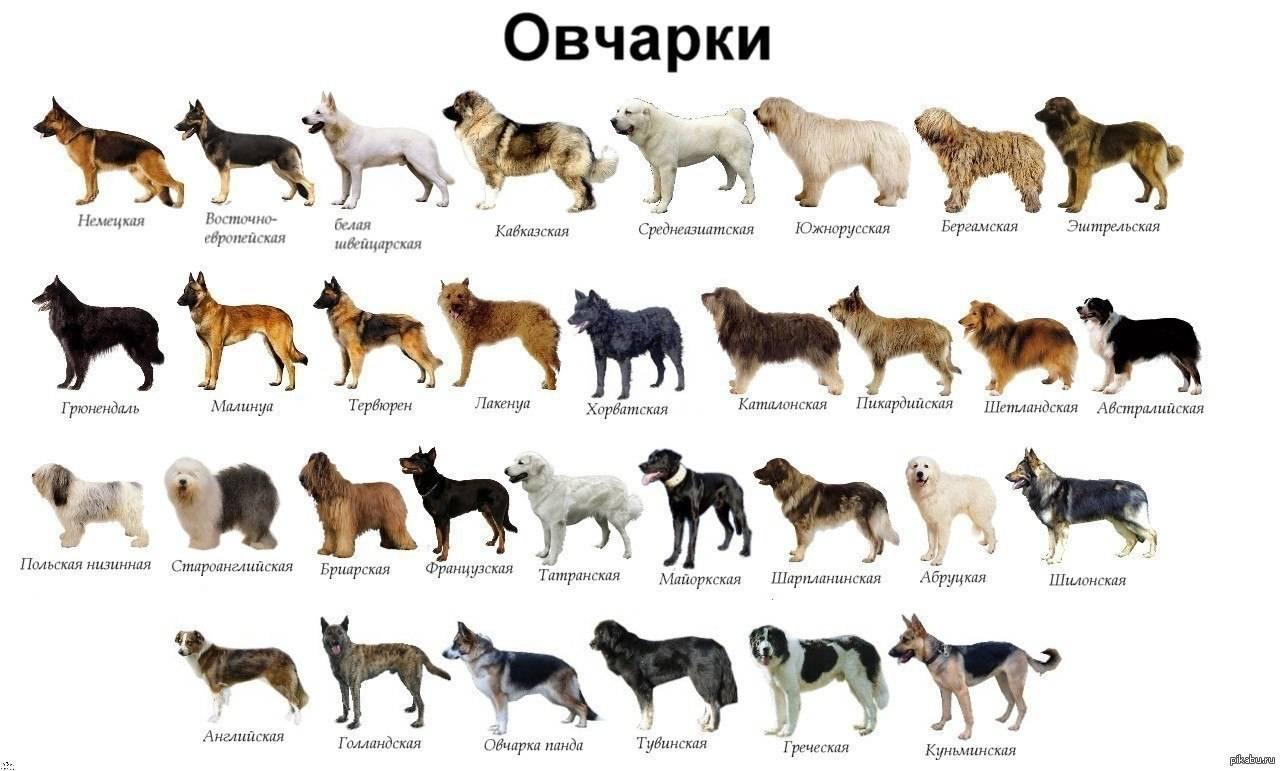 Самые древние породы собак в мире: описание и фото | все о собаках