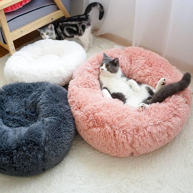 Экзотические животные для квартиры: 10 необычных питомцев