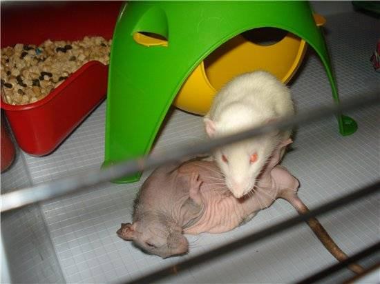 Мышка с полоской