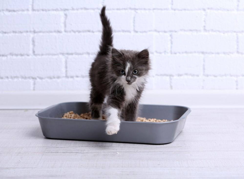Почему кошки закапывают еду | миску с едой лапой