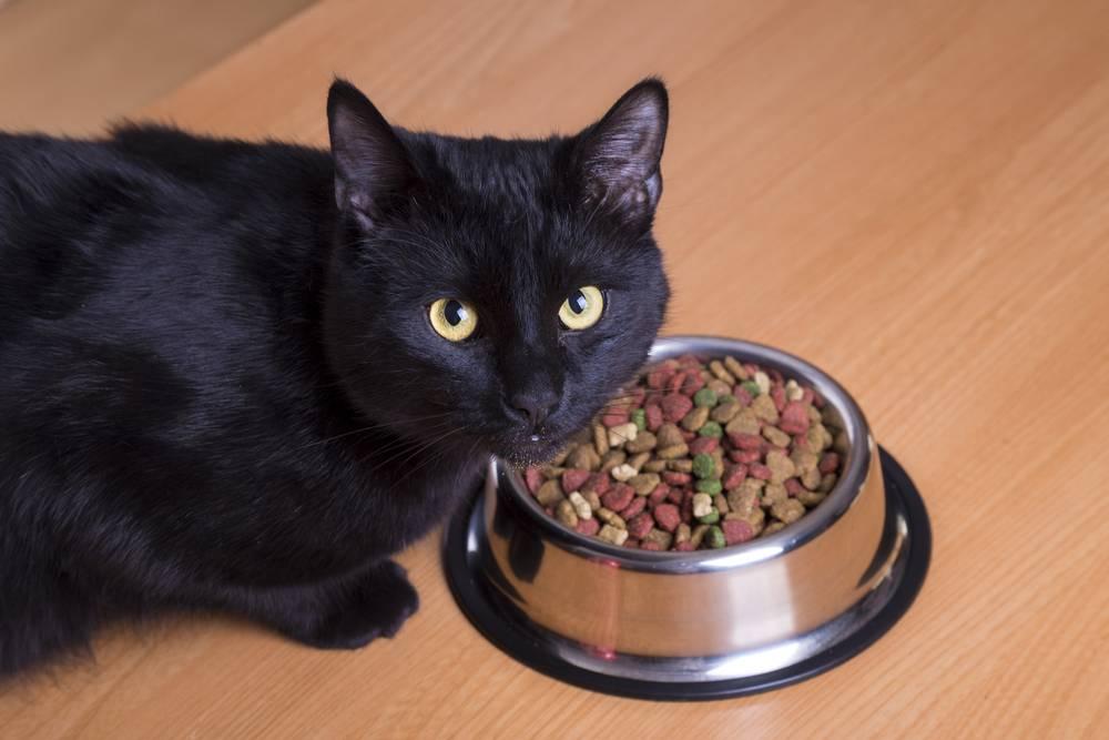 Рвота у кошки или кота: причины и лечение в домашних условиях
