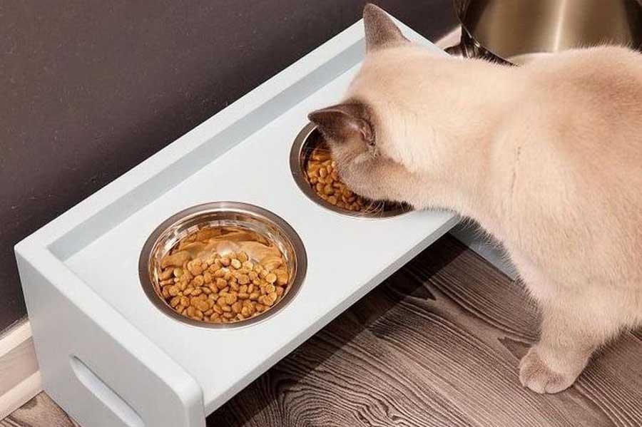 Как охладить кошку(кота) в жару