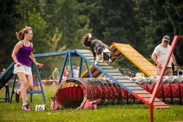 Олимпиада для собак, это аджилити