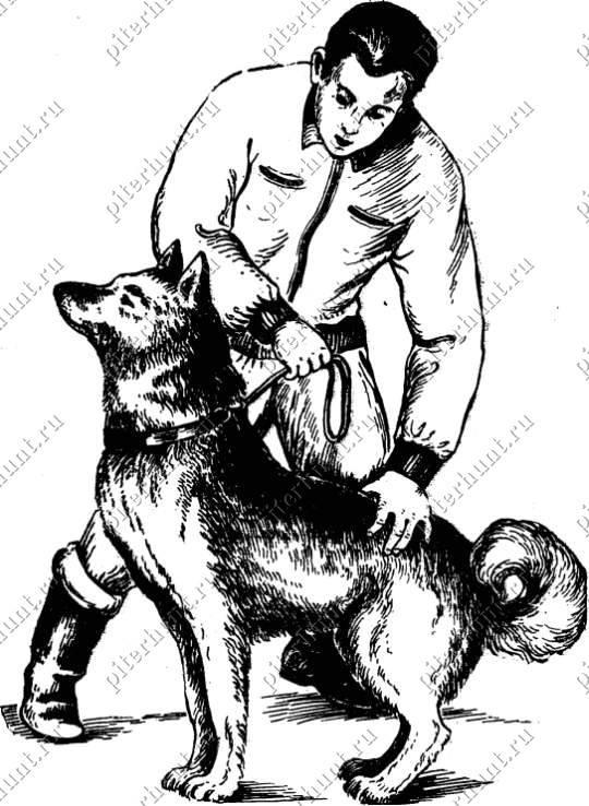 Как научить собаку команде «сидеть»: просто и понятно