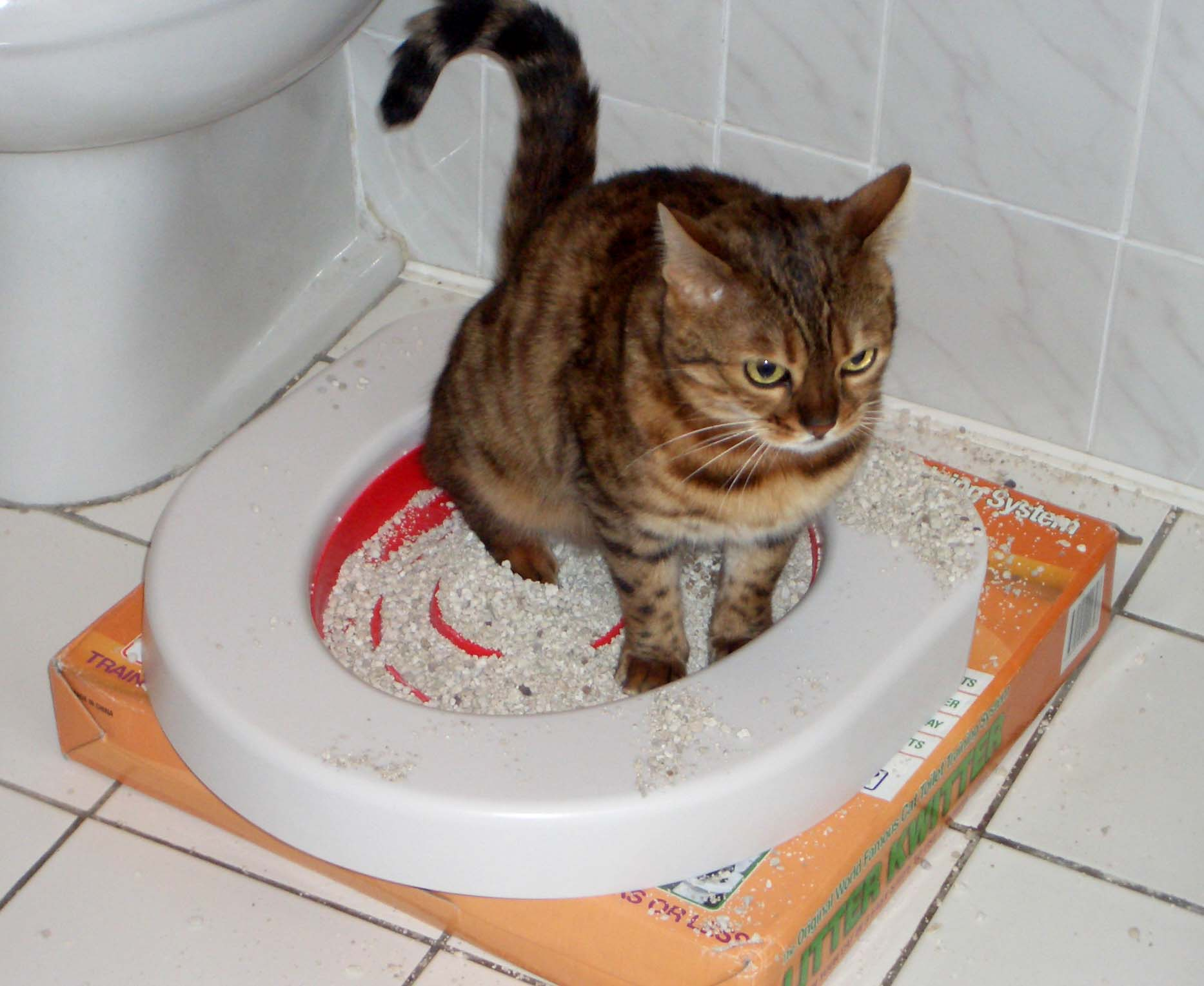 Кот не может сходить в туалет — что делать?
