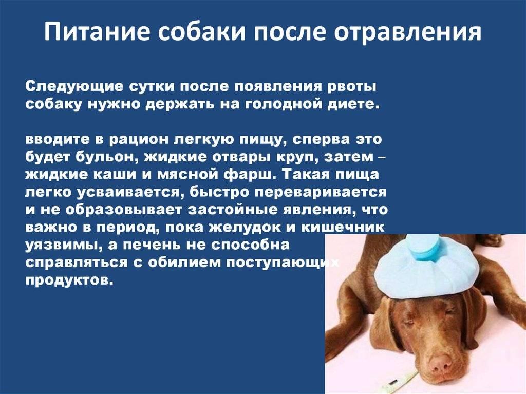 Что делать если отравилась собака