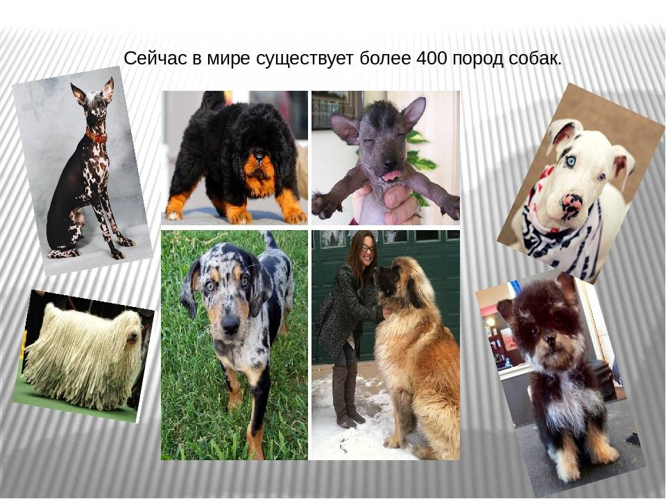Сколько пород собак в мире - виды и их характеристика
