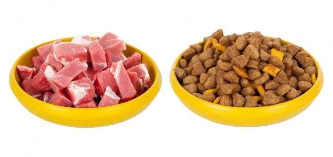 Можно ли совмещать сухой корм и натуральный для собак