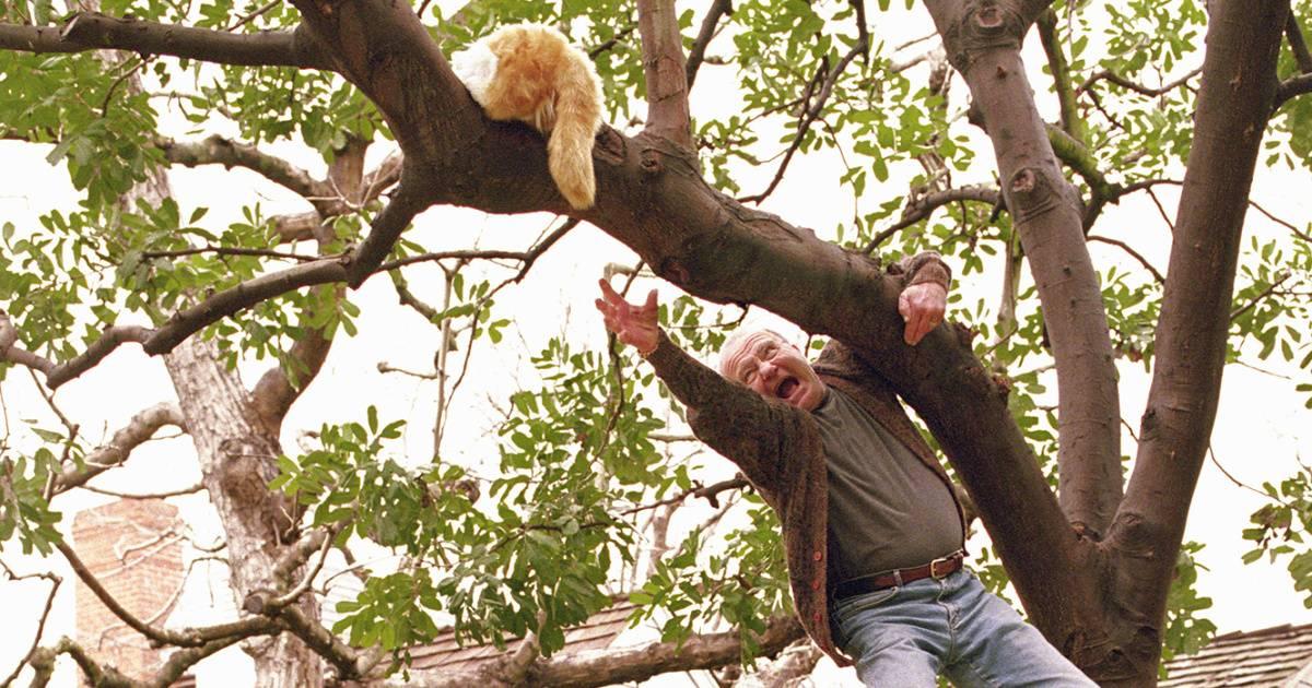 Как снять кошку с дерева: полезные советы