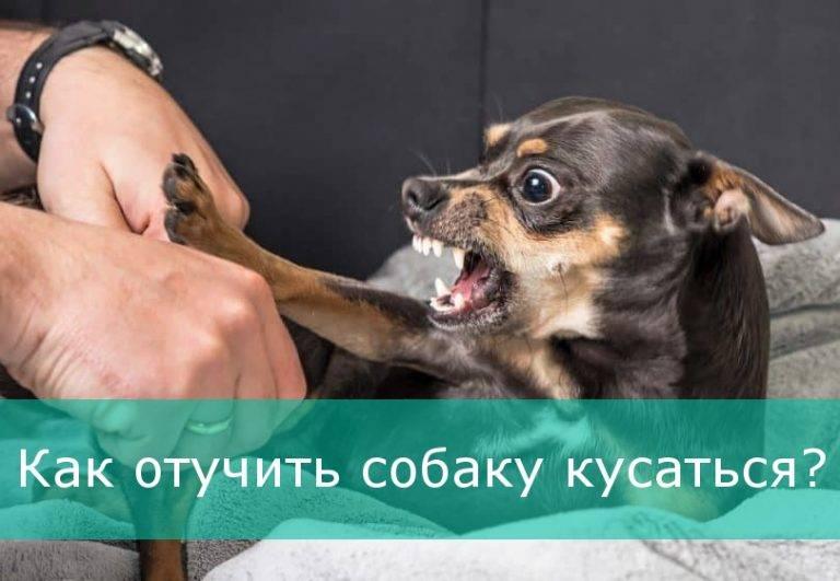 Как отучить кусаться щенка немецкой овчарки