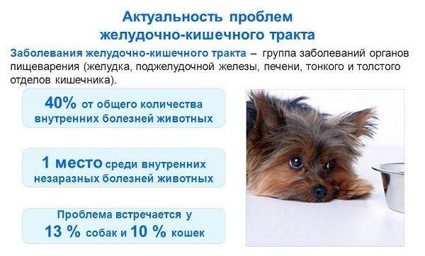 Слабость у собак, собака вялая