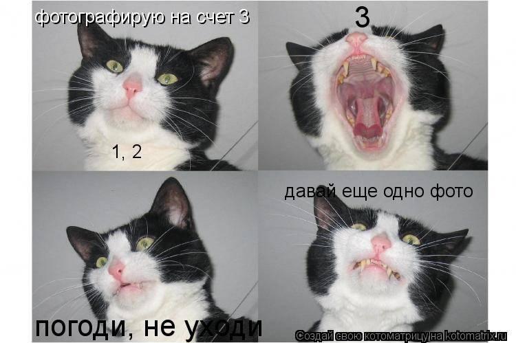Как узнать, что ты раздражаешь своего кота