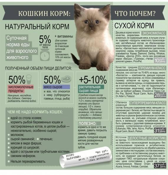Чем кормить котенка в 1 месяц: как правильно без кошки, как часто в домашних условиях, сколько раз в день