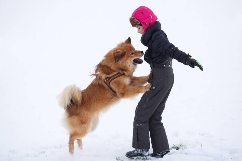 Как отучить собаку прыгать на людей от радости при встрече – способы