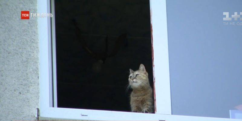Как найти кошку, если она убежала
