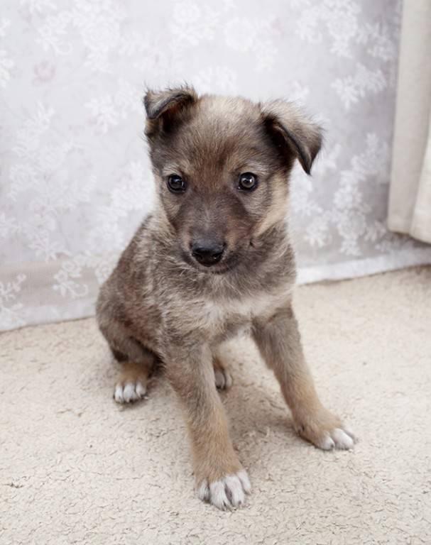 Клички для маленьких собак девочек, красивые имена для щенков маленьких пород.