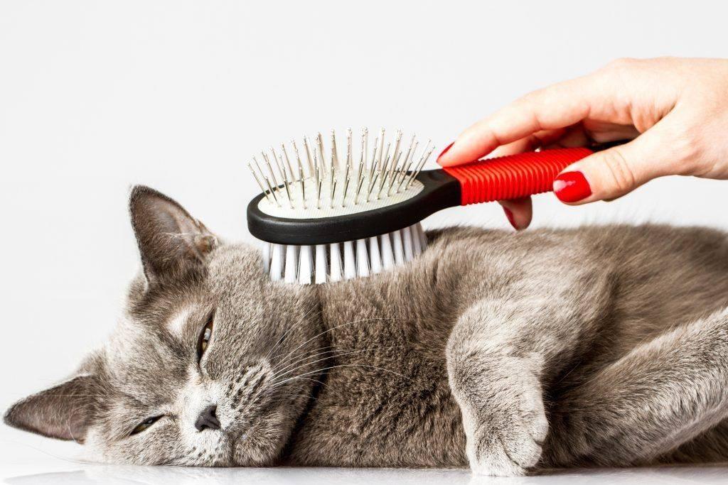 Как вычесывать кошку. самые лучшие советы как это делать