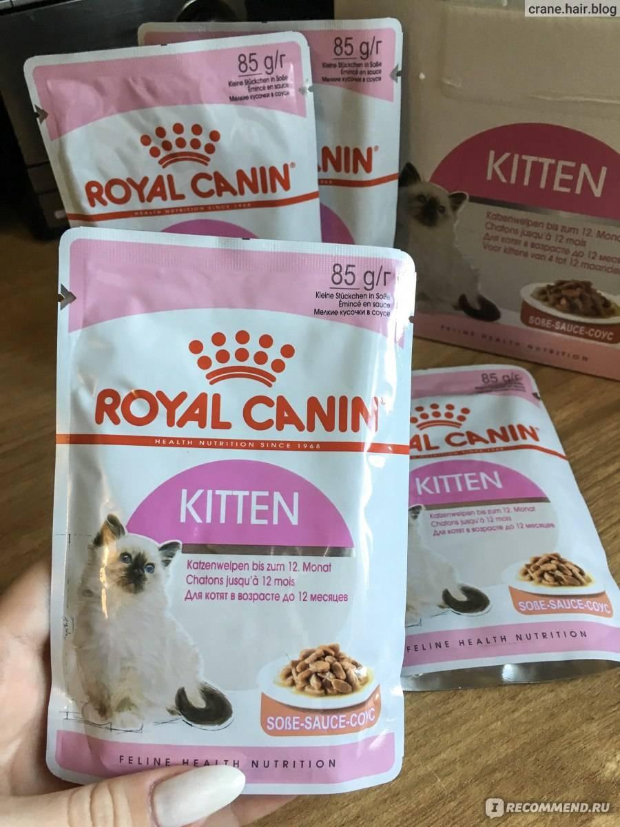 """Какой лучше сухой корм для кошек: рейтинг — """"лапы и хвост"""""""