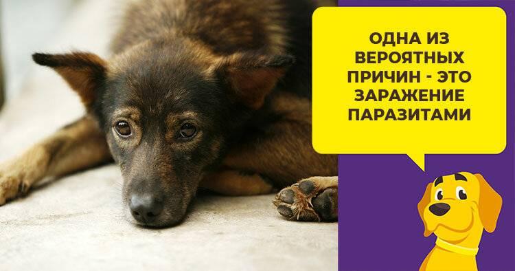 Почему собака бегает за хвостом – нормальное поведение или тревожный симптом?