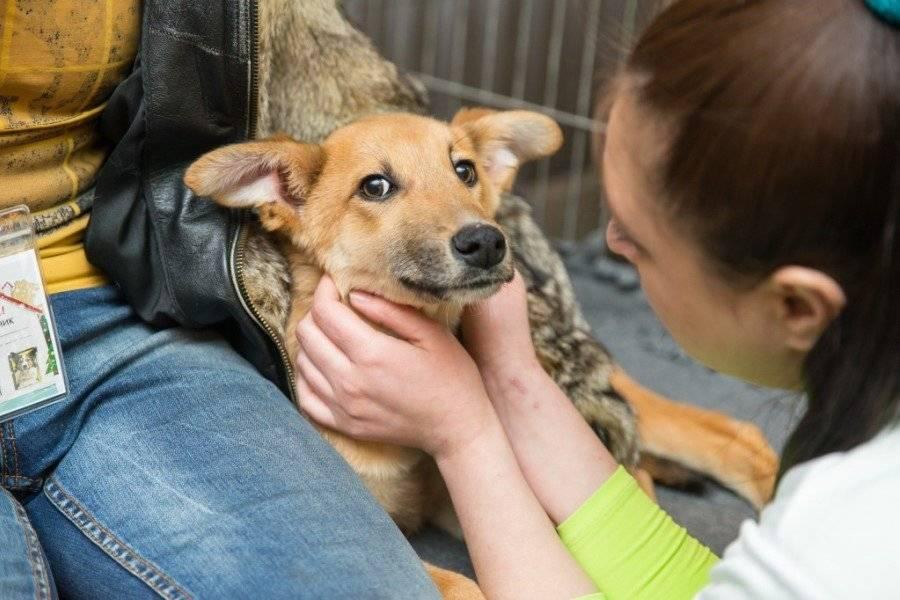 Приюты для бродячих животных - портал открытых данных правительства москвы приюты для бродячих животных