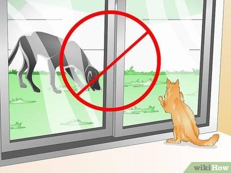 Как отучить кота метить территорию в квартире и гадить по углам