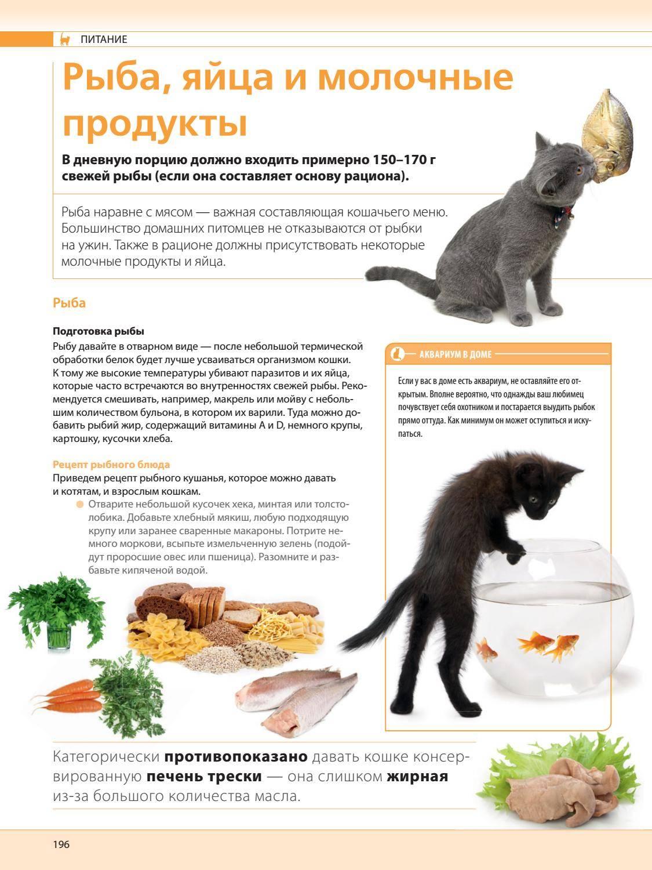 Можно ли кошкам давать рыбу