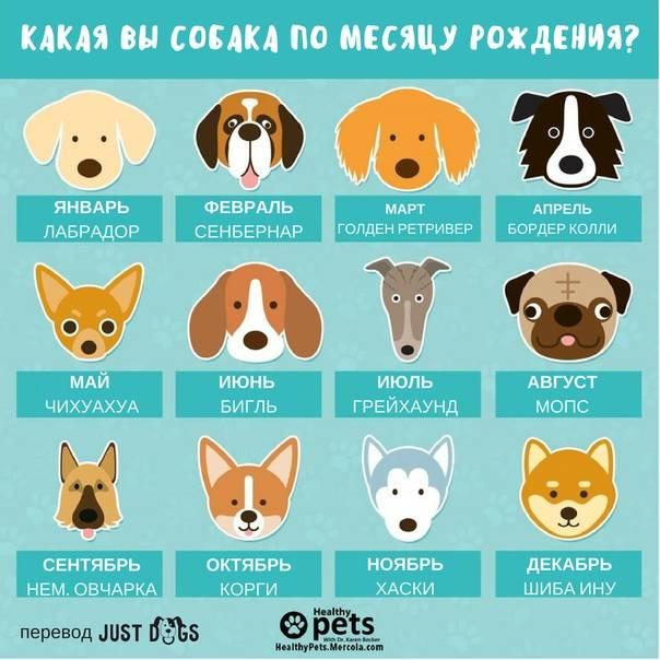 Хочешь узнать, какая ты собака по знаку зодиака? тогда этот гороскоп для тебя!