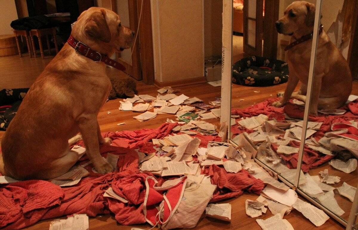 Что делают собаки, когда хозяев нет дома: топ странных занятий