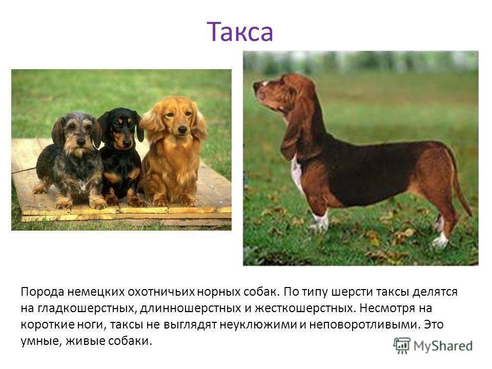 Русские породы собак — наши родные