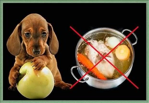 Почему собакам нельзя есть кости - red fox day