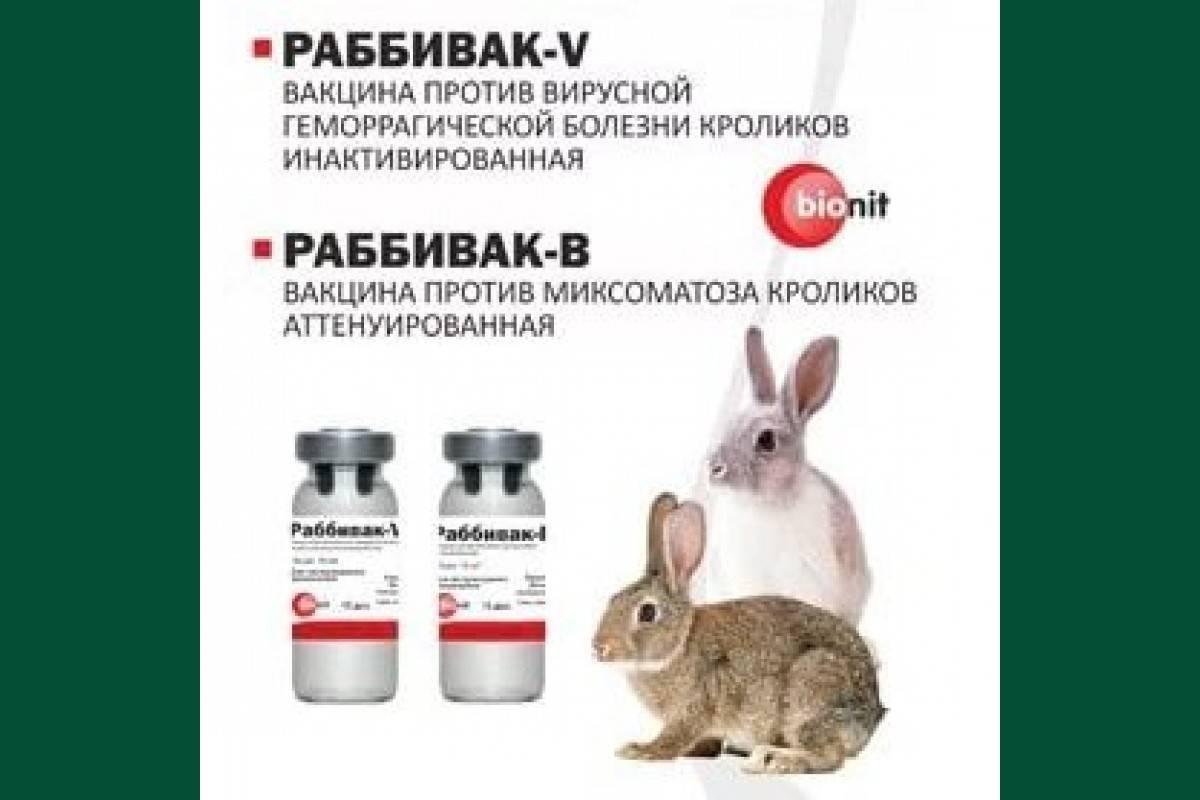 Ассоциированная вакцина для кроликов от миксоматоза