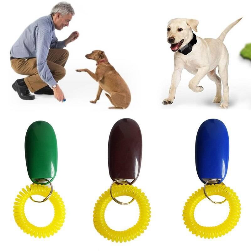 Клик-дрессировка собаки: суть, методы и правила