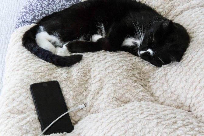 """Взрослая кошка стала мочиться на диван — обсуждение в группе """"кошки""""   птичка.ру"""