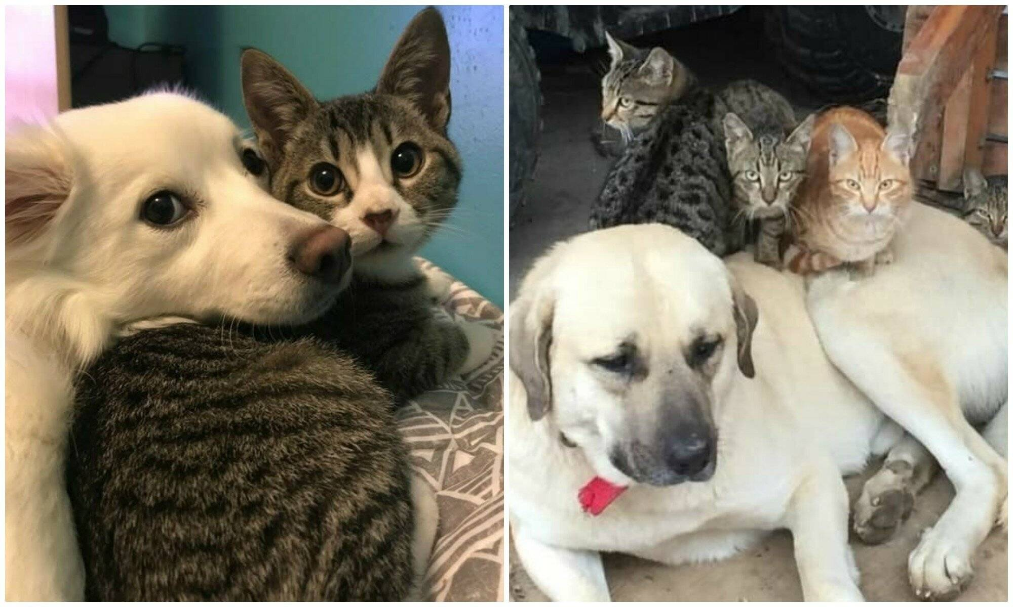 Как подружить кошку с собакой в квартире и правильно их познакомить?