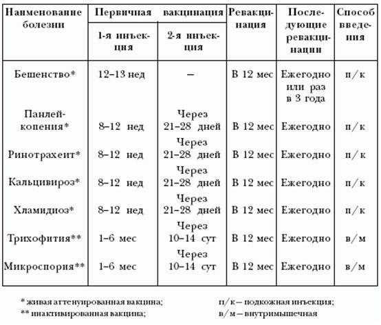 Таблица и график прививок собакам по возрастам - здоровая жизнь