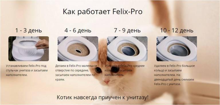 Как приучить кошку к унитазу после лотка: самостоятельное приучение в домашних условиях