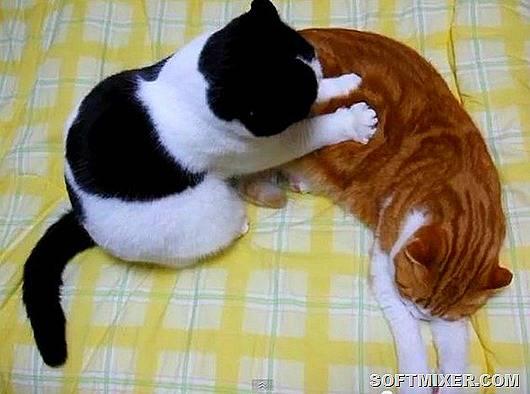 6 причин почему кошки топчутся лапами на человеке