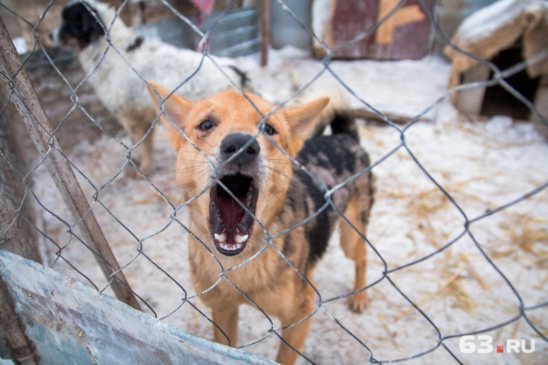 Собаки даром - в дар, в добрые руки бесплатно в москве — собаки