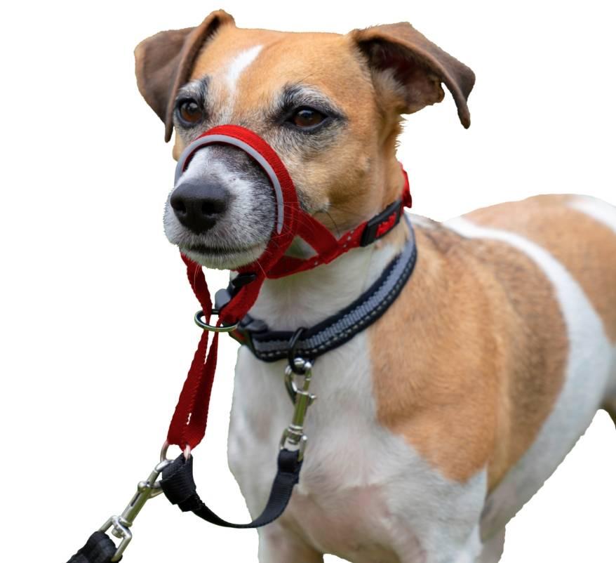 Что такое недоуздок для собаки и для зачем он нужен: как сделать халти поэтапно