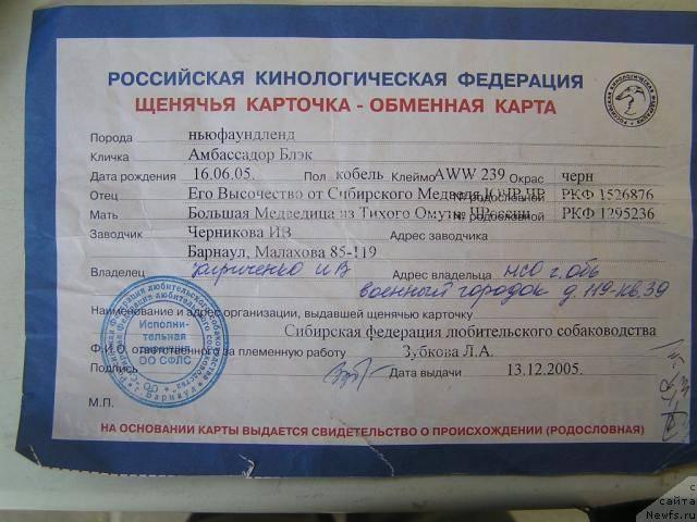 Какие документы дают в ркф для собак: как сделать паспорт и родословную