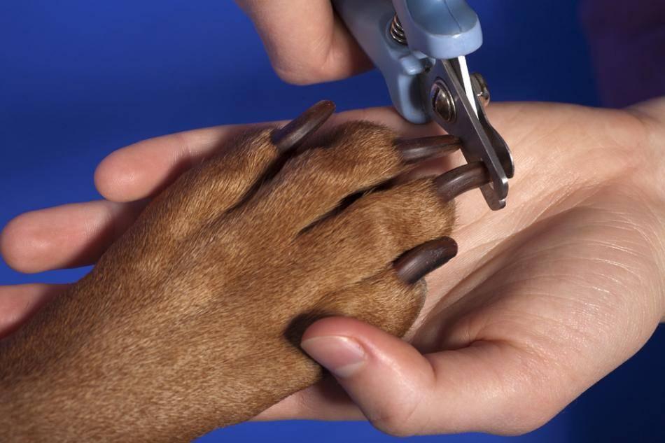 Как подстричь когти собаке правильно в домашних условиях
