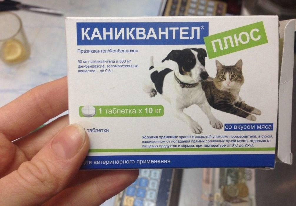 """Особенности применения препарата и инструкция к """"каниквантел плюс"""" для лечения паразитов у собак и кошек"""