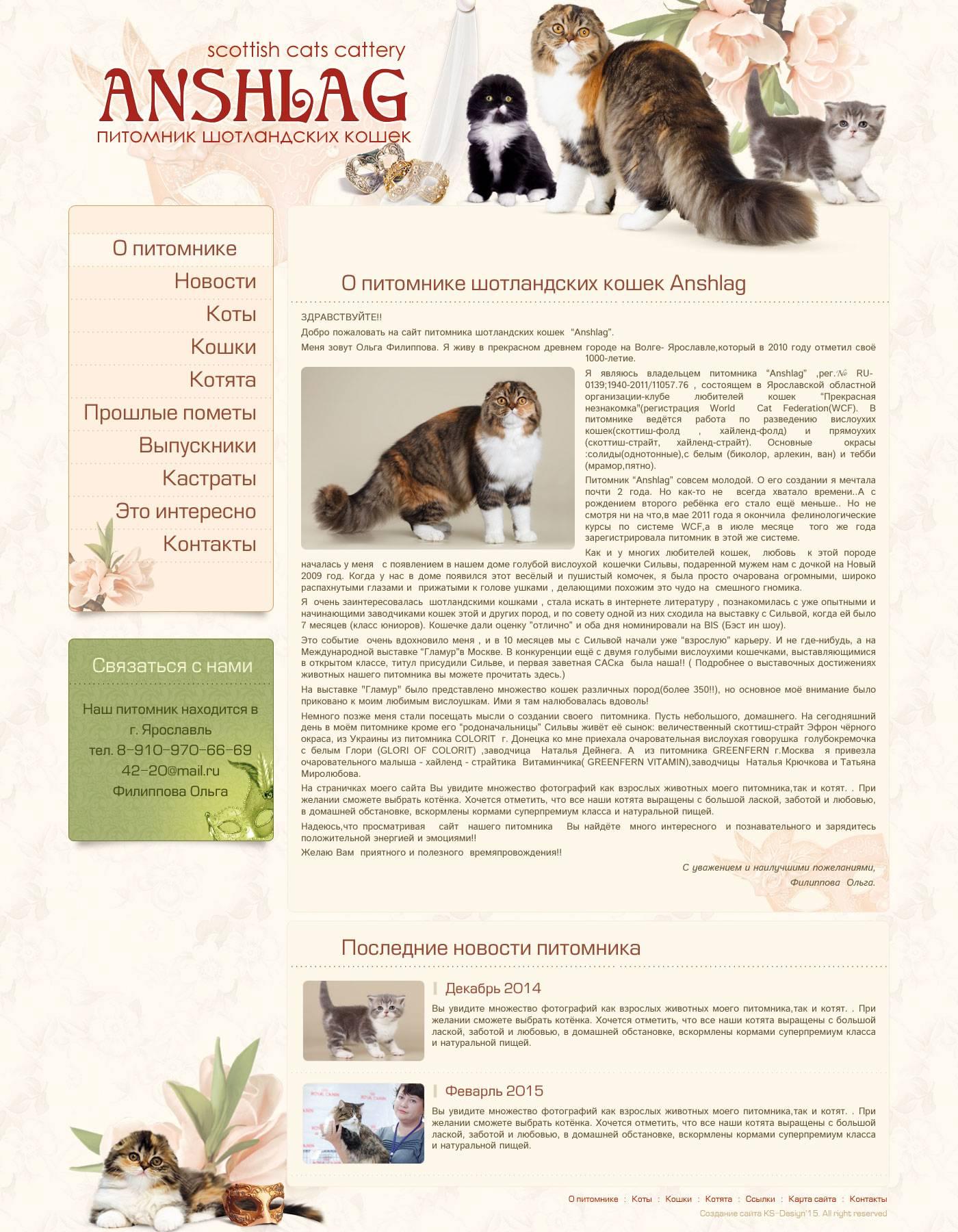 Как начать разводить кошек: с чего начать