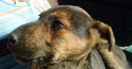 У собаки отекли глаза и щеки