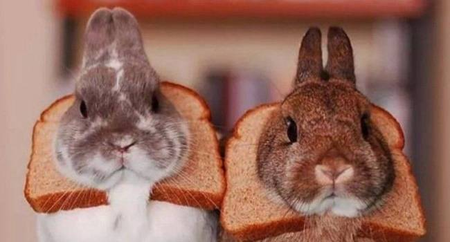 ✅ можно ли кролику давать хлеб: польза и вред, как правильно добавлять в рацион - tehnomir32.ru