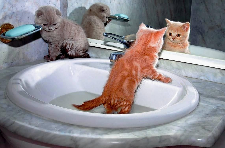 Как купать котенка в первый раз: когда можно начать и как часто?