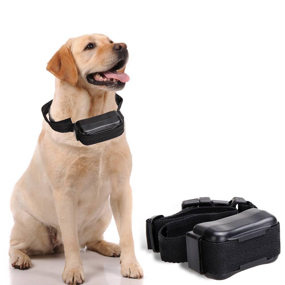 7 лучших электроошейников для собак - рейтинг 2020