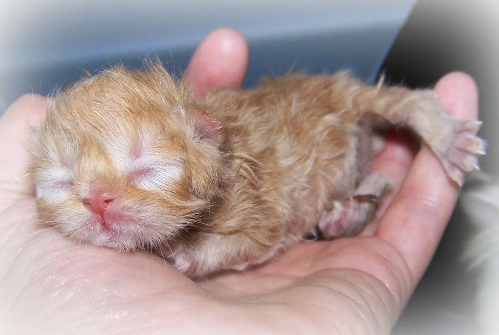 Когда у котят открываются глаза и через сколько дней они начнут видеть