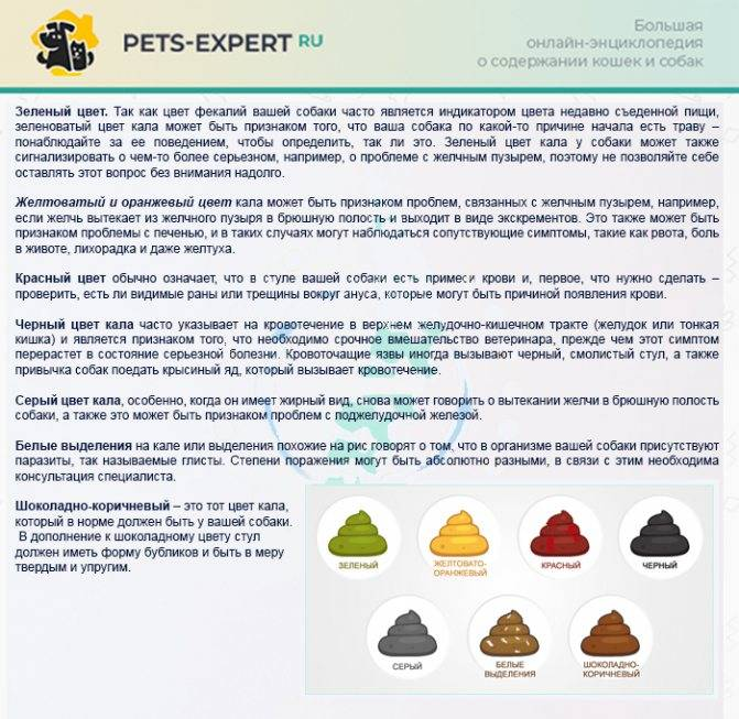 Понос у собаки (диарея): причины и лечение в домашних условиях